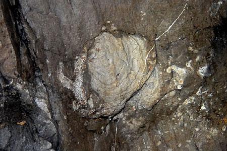 Stromatopora